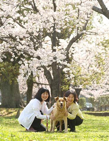 熊本 家族 ペット 桜 ロケーション